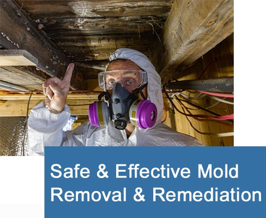 Effective Mold Removal and Remediation Steps