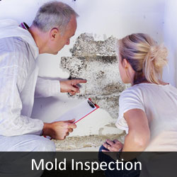 MIT Mold Inspection