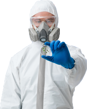Professional Mold Removal Expert