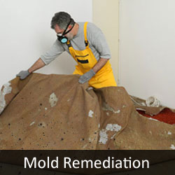 Mold remediation removing carpet because of mold