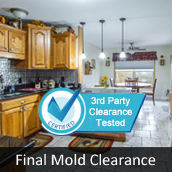 Certified Mold Free Clearance Test