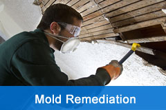 mold-remediation-demolition