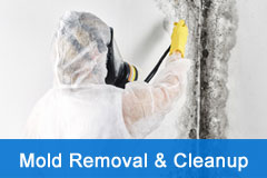 Mold Removal Cleanup